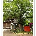 很美的菩提樹