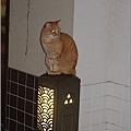 江之島的島貓
