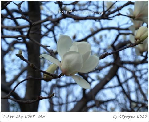 E510_20090317_022.jpg