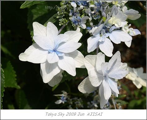 E510_20090619_010.jpg