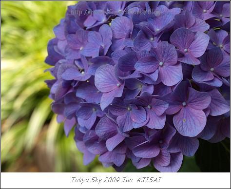 E510_20090619_015.jpg