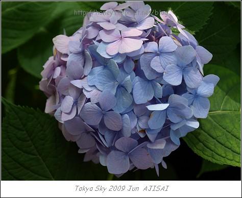 E510_20090619_057.jpg