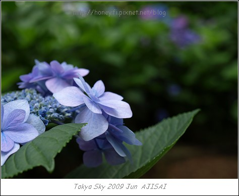 E510_20090619_089.jpg