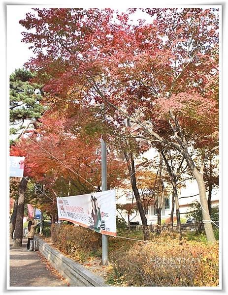 IMG_8245韓國慶熙大學賞楓.JPG