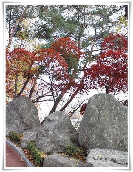 IMG_8269韓國慶熙大學賞楓.JPG