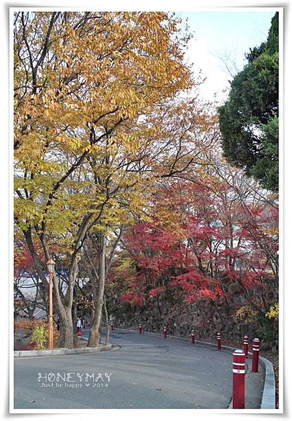 IMG_8298韓國慶熙大學賞楓.JPG