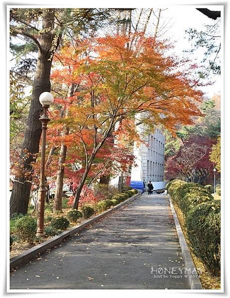 IMG_8445韓國慶熙大學賞楓.JPG