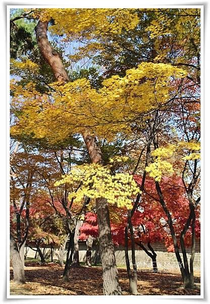 IMG_8686昌慶宮.JPG