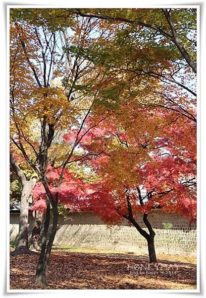 IMG_8687昌慶宮.JPG