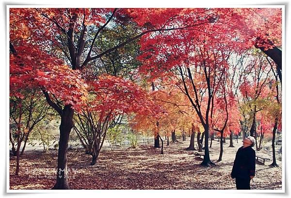 IMG_8718昌慶宮.JPG