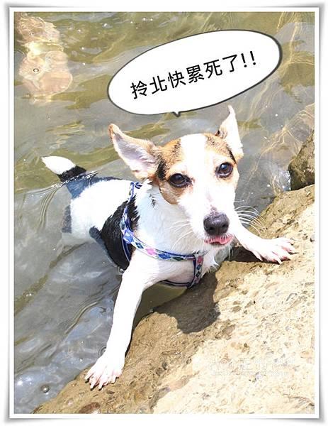 IMG_8672坪林虎寮潭.JPG