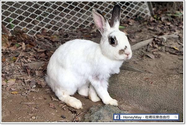 IMG_8639To House八里兔子.JPG