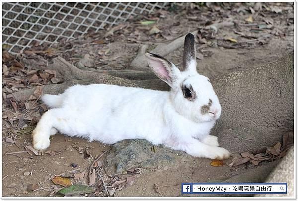 IMG_8640To House八里兔子.JPG