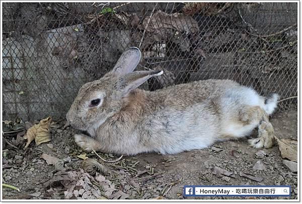 IMG_8643To House八里兔子.JPG