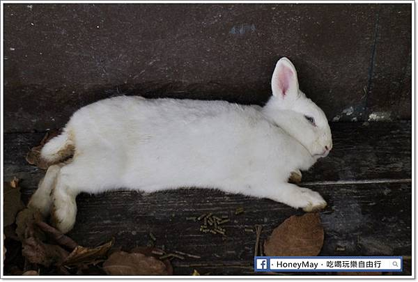 IMG_8647To House八里兔子.JPG