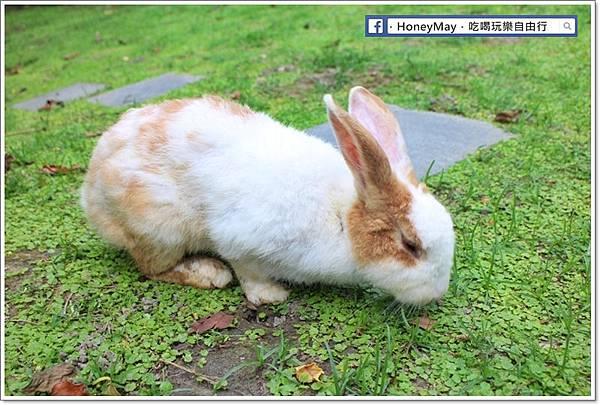 IMG_8651To House八里兔子.JPG