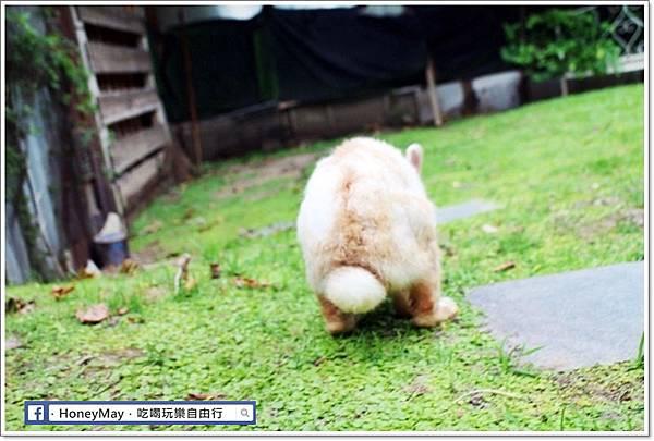 IMG_8654To House八里兔子.JPG