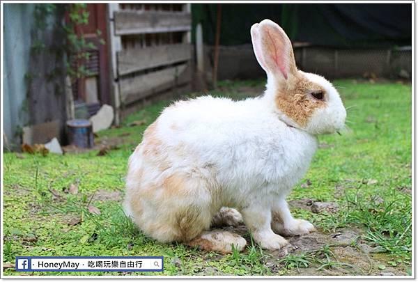 IMG_8657To House八里兔子.JPG