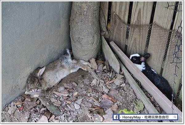 IMG_8659To House八里兔子.JPG