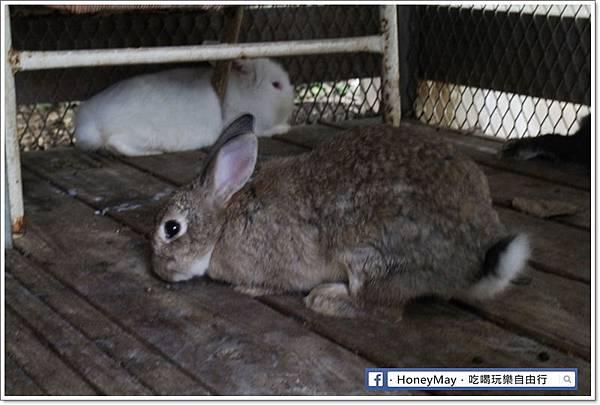 IMG_8660To House八里兔子.JPG