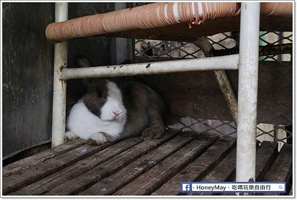 IMG_8661To House八里兔子.JPG