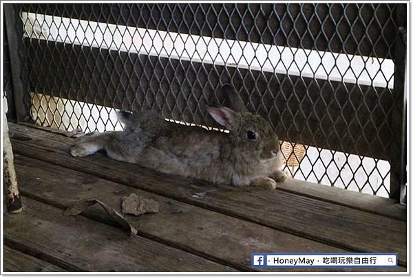 IMG_8666To House八里兔子.JPG