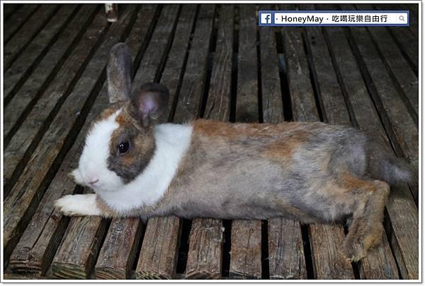 IMG_8669To House八里兔子.JPG