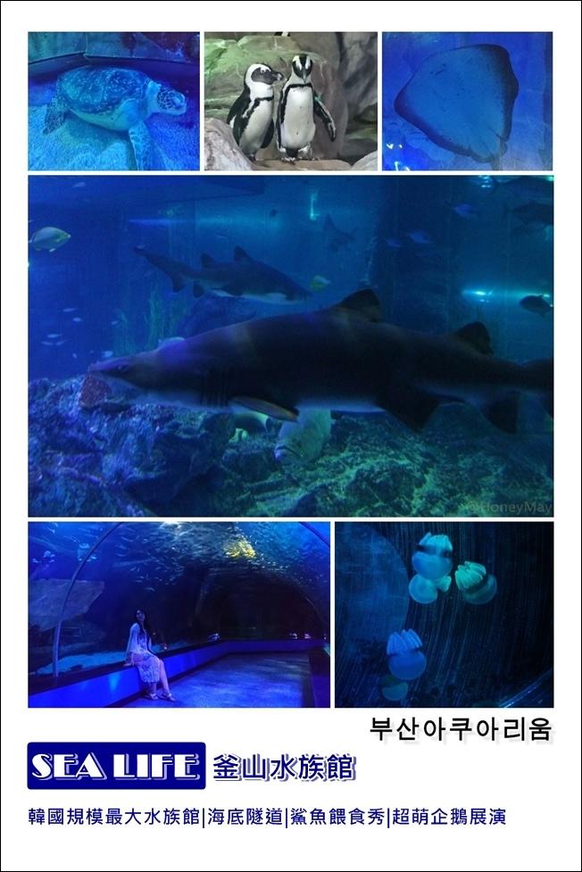 1-20190523 釜山Sea Life.jpg