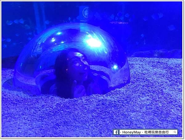20190523 (30)釜山水族館sea life.jpg