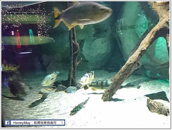 DSC_0777釜山水族館sea life.JPG
