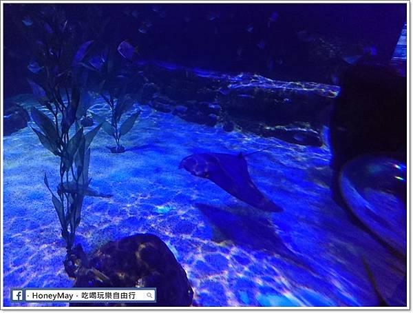 DSC_0786釜山水族館sea life.JPG
