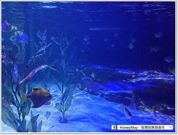 DSC_0789釜山水族館sea life.JPG
