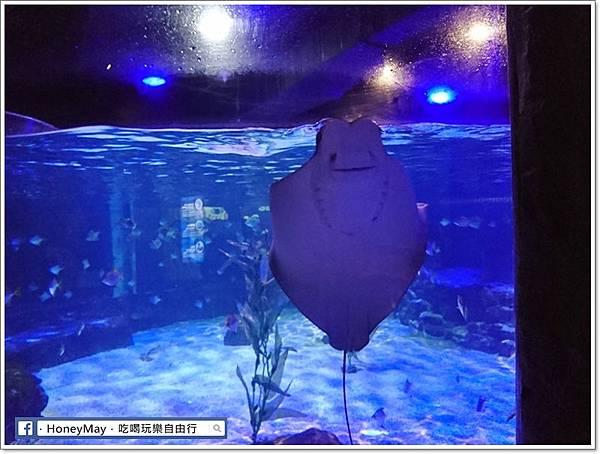 DSC_0794釜山水族館sea life.JPG