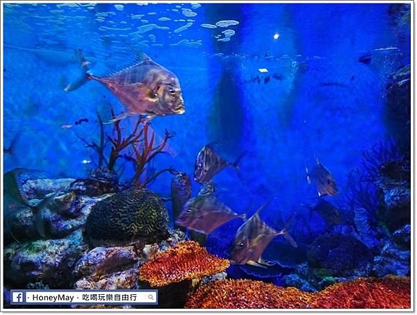 DSC_0797釜山水族館sea life.JPG
