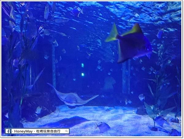 DSC_0800釜山水族館sea life.JPG