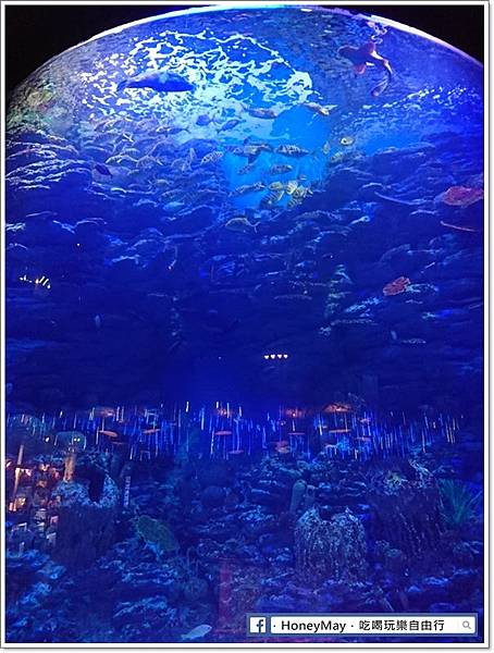 DSC_0810釜山水族館sea life.JPG