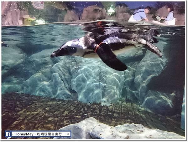 DSC_0821釜山水族館sea life.JPG