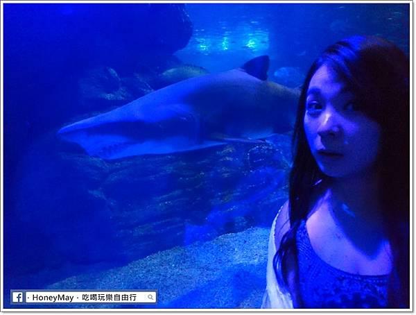 DSC_0850釜山水族館sea life.JPG