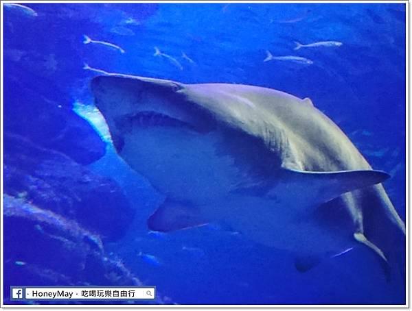 DSC_0872釜山水族館sea life.JPG