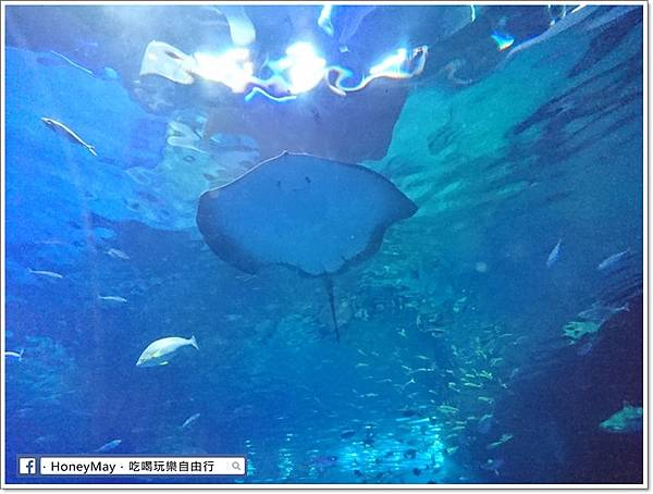 DSC_0874釜山水族館sea life.JPG