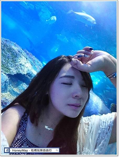 DSC_0884釜山水族館sea life.JPG