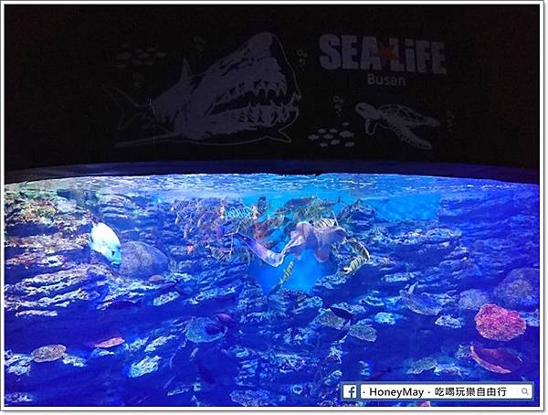 DSC_0919釜山水族館sea life.JPG