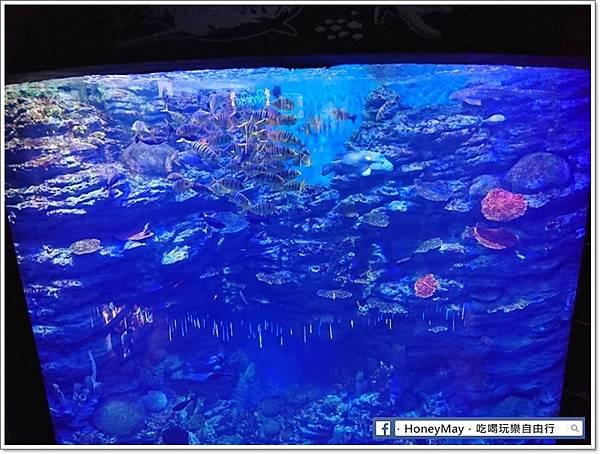 DSC_0920釜山水族館sea life.JPG