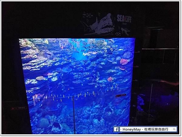 DSC_0921釜山水族館sea life.JPG