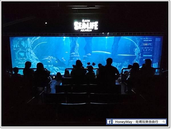 DSC_0923釜山水族館sea life.JPG