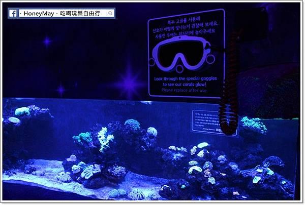 IMG_8173釜山水族館sea life.JPG