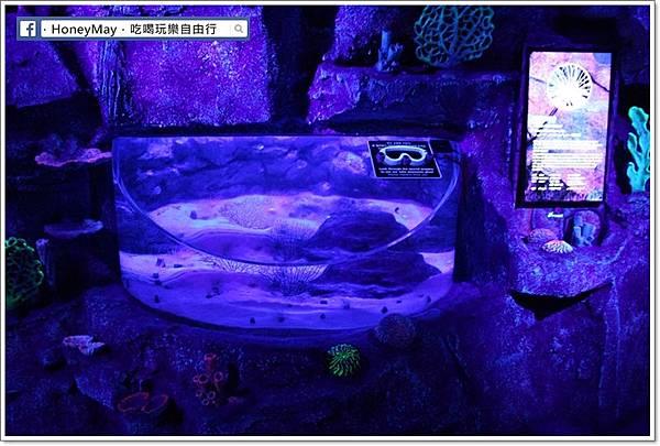 IMG_8175釜山水族館sea life.JPG