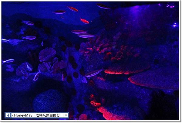 IMG_8180釜山水族館sea life.JPG