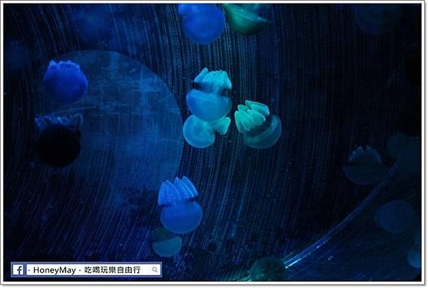 IMG_8195釜山水族館sea life.JPG