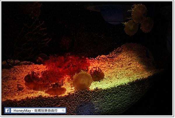 IMG_8197釜山水族館sea life.JPG